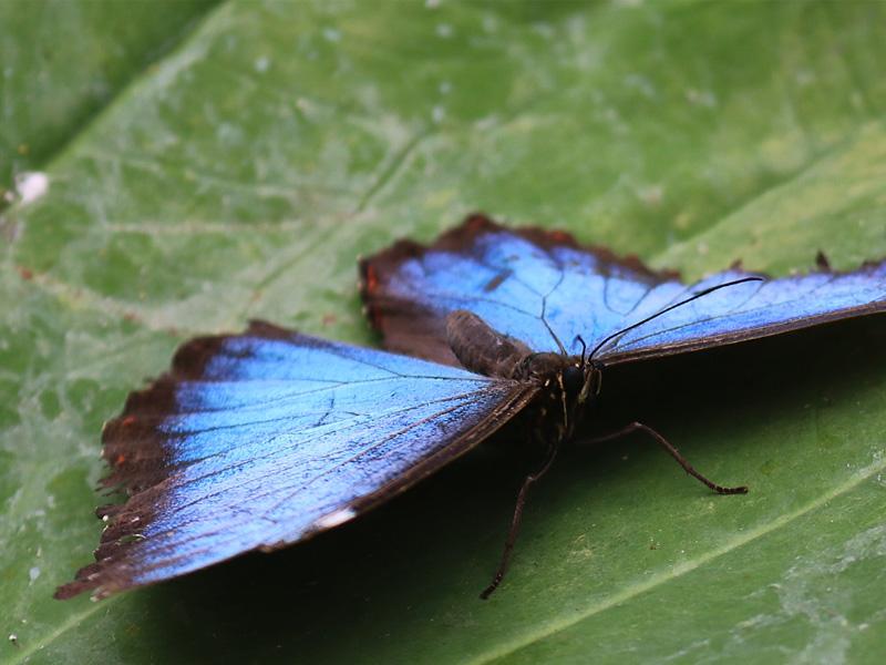 Farben der Schmetterlinge