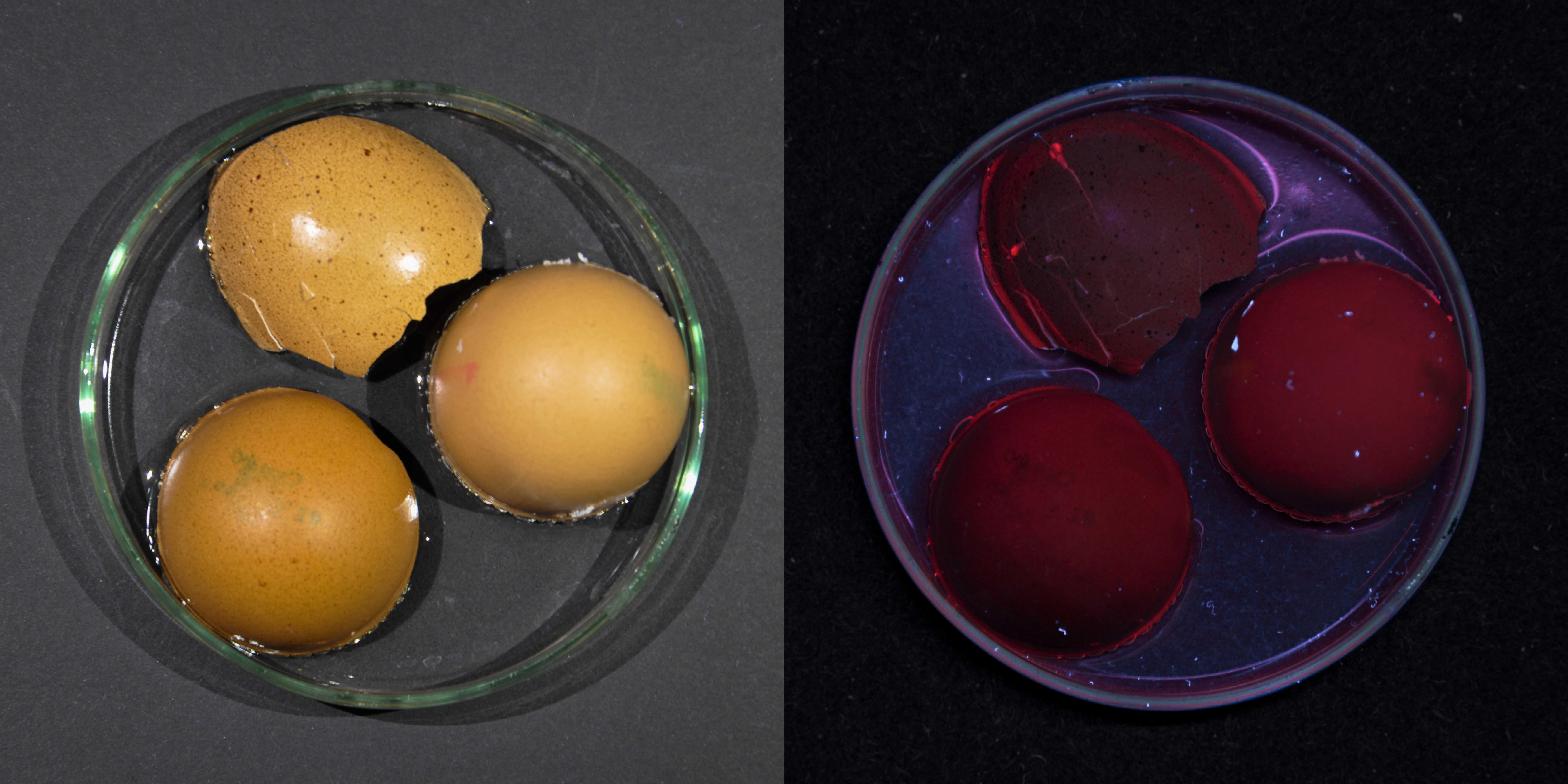 braune Eierschale in Nagellackentferner und Essig